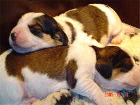 pups-1-week-011